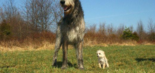 spielzeug für große hunde